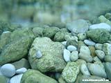 Залив Стинива под водой Хорватия отдых 2013