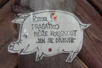 tochnik-srednecheshskij-kraj-2016 (36) Точник «Točník» Среднечешский край 2016