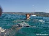Утреннее плавание Хорватия отдых 2013